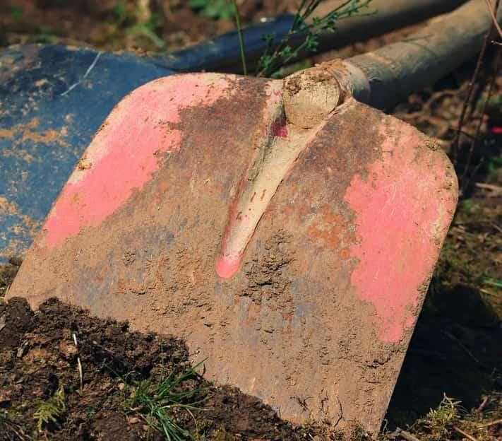 creuser un trou pour planter un camellia sasanqua