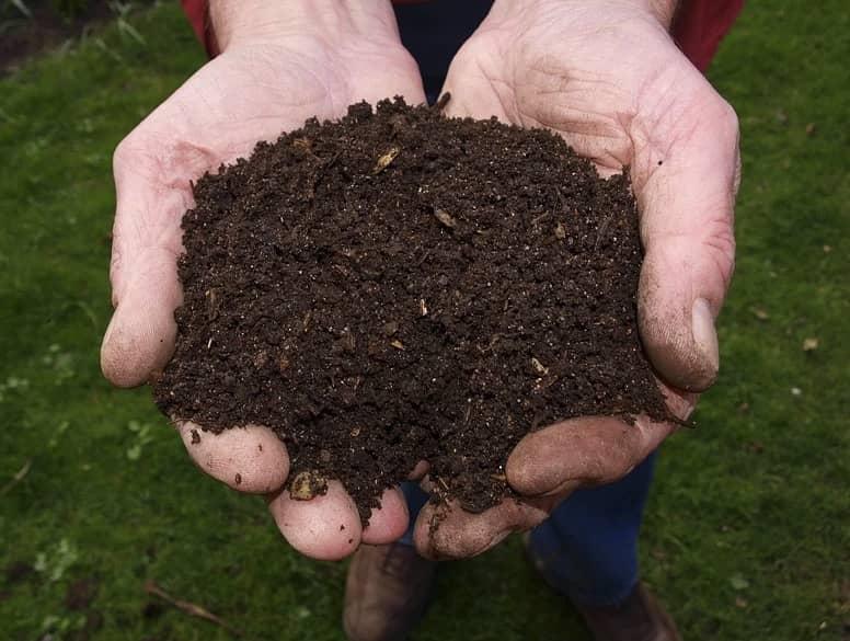 compost pour camélia