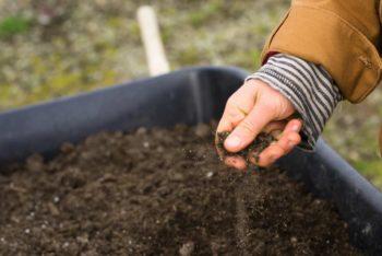 niveau de pH du sol pour le camélia